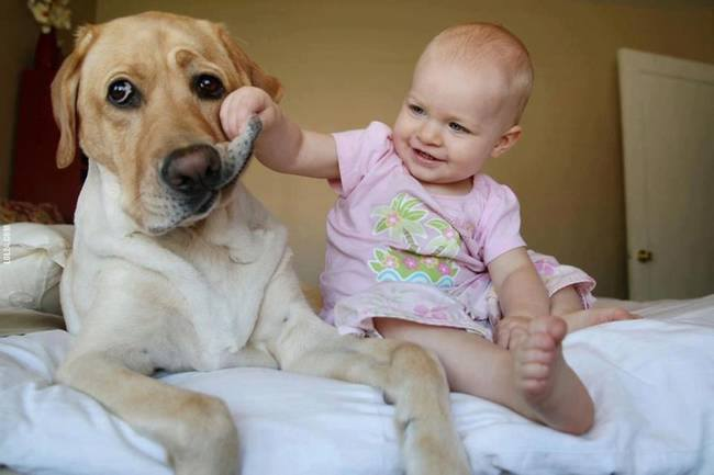 Amazing Dogs Watch Over Babies