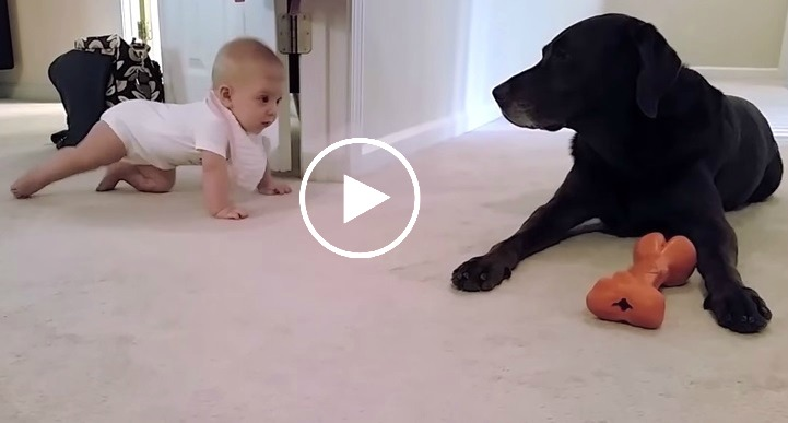 You Won't Believe The Dog's Response To The Approaching Baby