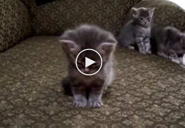 Little Kitten So Tired Cutest vid ever