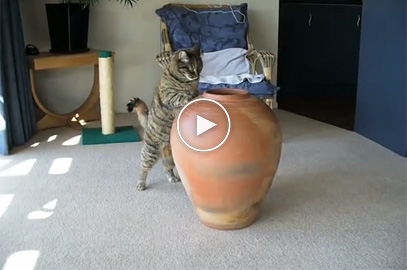 Fat Cat getting in the pot, so funny!