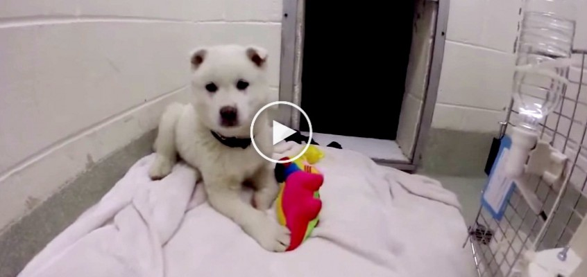 Snowball, one of the 23 dogs rescued from a dog meat farm in South Korea