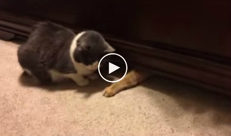 A Very Smart Cat Grabs Treats From Beneath The Bed