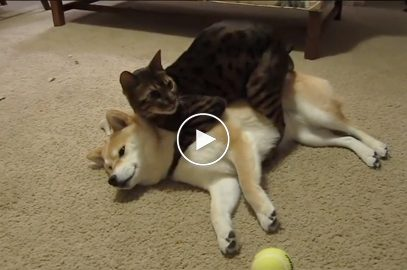 Watch this Precious Kitty clean her Best Friend!