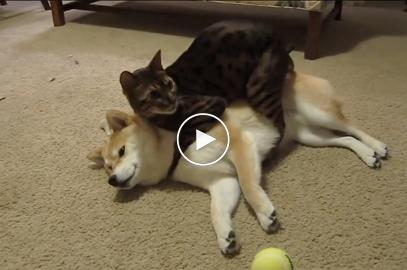 Watch this Precious Kitty clean her Best Friend!